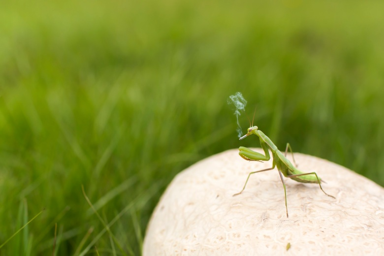 Praying Mantis Smoking | Verve